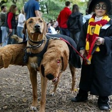 Harry Potter and Fluffy